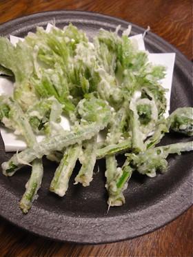 山菜の天ぷら☆こしあぶら&こごみ