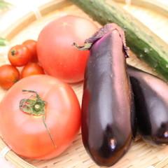 野菜室にしまうだけじゃダメ!野菜の片付け方レッスン付き 普段使いごはん