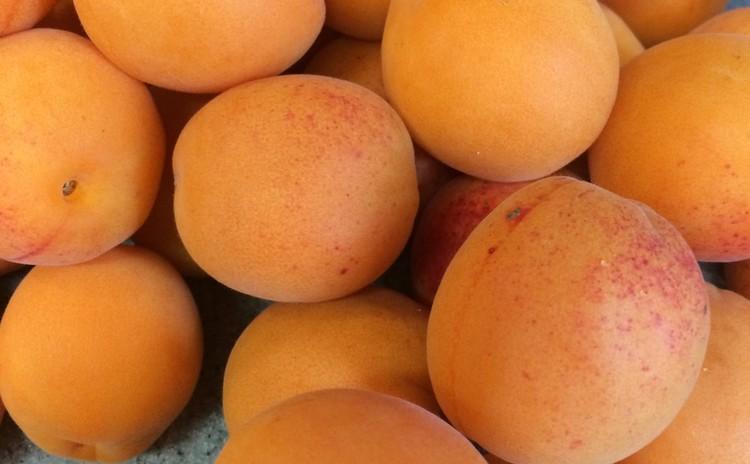 杏のシロップ漬け&杏ジャム&パスタ&なすのフリット他7月15日最終日