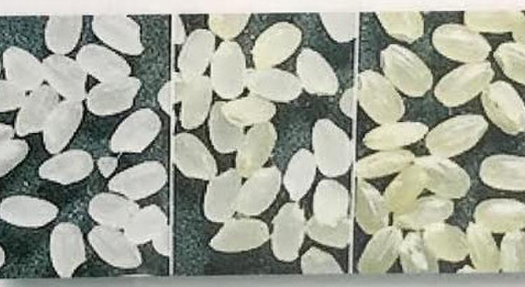 ①日本酒の基礎知識(酒米と飯米の違い)