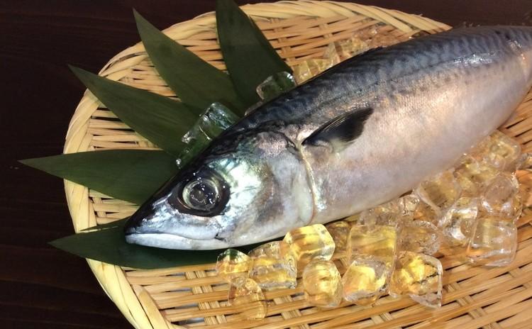 寿司屋直伝 鯖の三枚おろし&しめ鯖の作り方