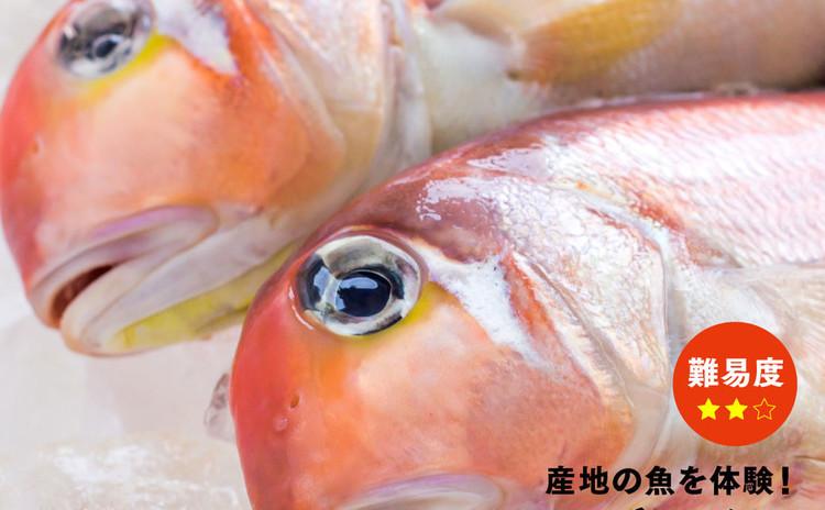 【島根県大田市の魚を体験! アマダイ編】難易度★★☆