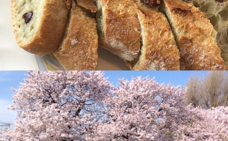 春爛漫 - 絶品 桜バゲット