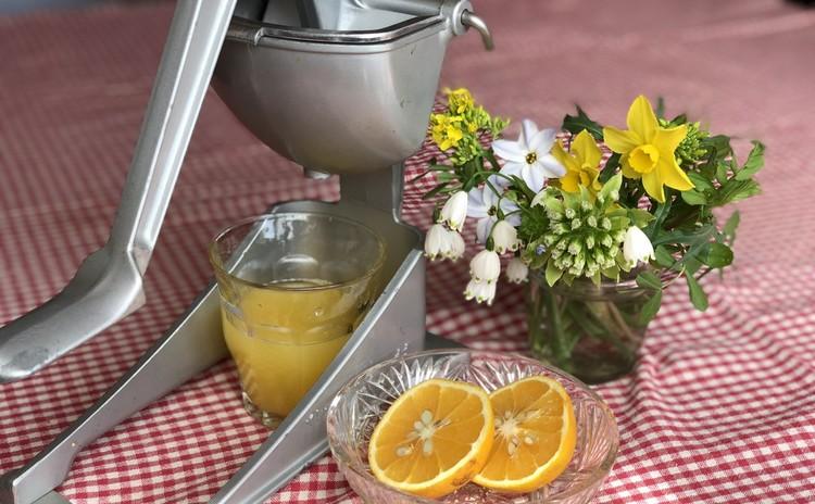 自家製オレンジジュース