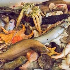 深海ギョッチ ~底曳網の出荷されない魚を眺めて食べる会~