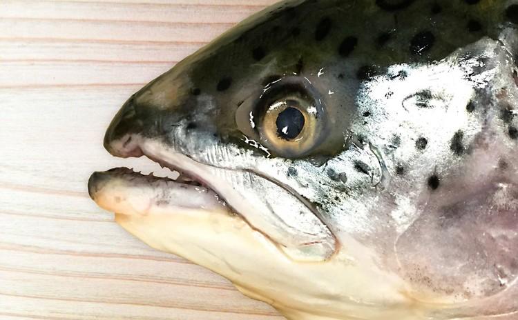 さかなを愛でて食べる会(秋だ!鮭を丸ごと楽しもう編)
