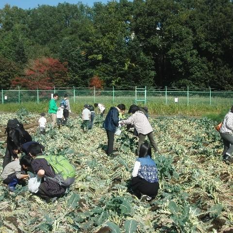 畑での収穫体験