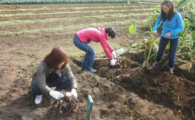 秋野菜の収穫作業体験とランチ