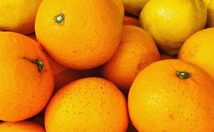 発酵講座 季節の手しごと 柑橘類でつくる自家製無添加ポン酢