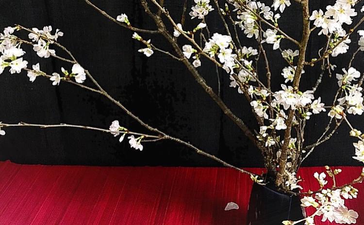【春の和テーブル②】
