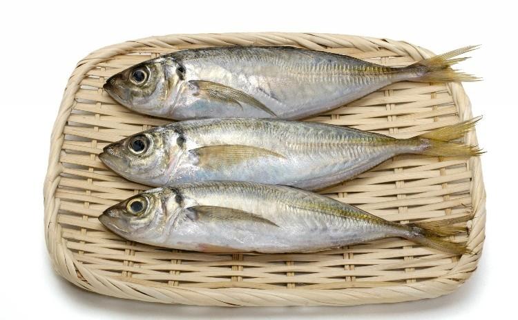 ◆魚のさばき方 入門編