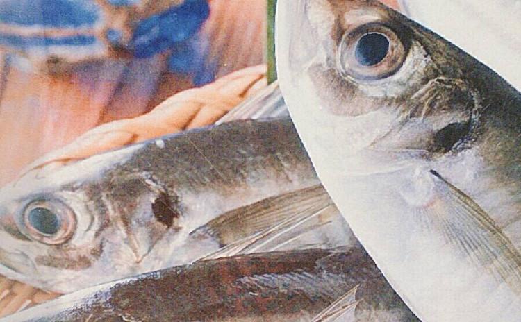 鮮魚を捌く