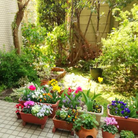 季節の花が楽しめるお庭