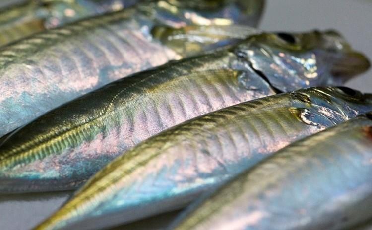 ◆魚の捌き方講座 下処理 三枚おろし 刺身の切り方など