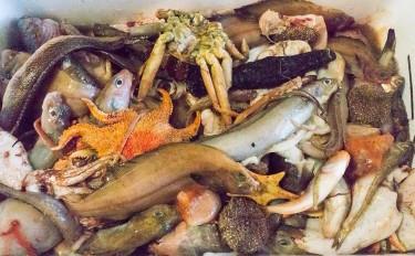 深海ギョッ!奥深いのは海だけではなかった!?魚好きイタリア人が「深海ギョッチ」の会に参加してみたレポ