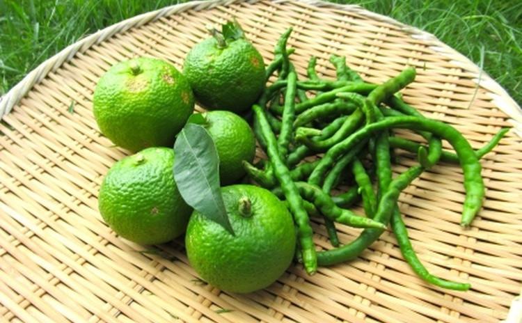 【うめちゃんの発酵教室】青柚子胡椒と青柚子酵素ジュース作り