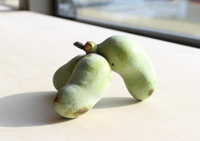 幻の果物「ポポー」を試してみた!