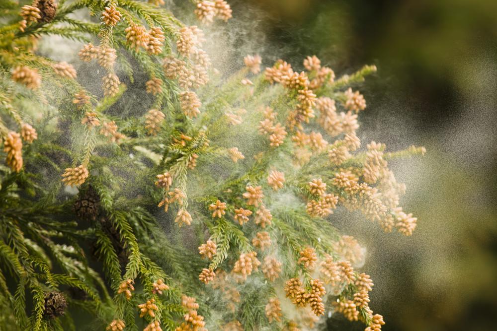 花粉症対策は早めが大事!防ぐポイントはマスクと◯◯【体の内側からキレイを目指す!美腸ライフVol.2】