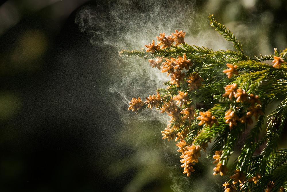 食事で花粉症対策! ヨーグルト以外の注目食品とは!?【体の内側からキレイを目指す!美腸ライフVol.3】