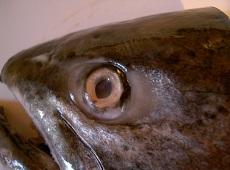 鮭の頭で北海道の郷土料理☆三平汁