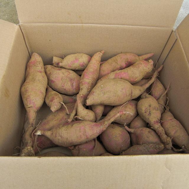さつま芋 の 保存 方法