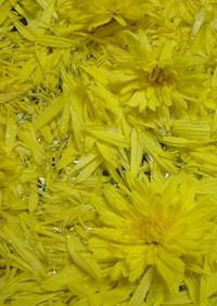食用菊の保存