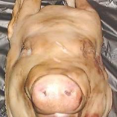 塩漬けした、ゆで豚の頭