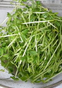 家にあるもので‼︎野菜の水切り