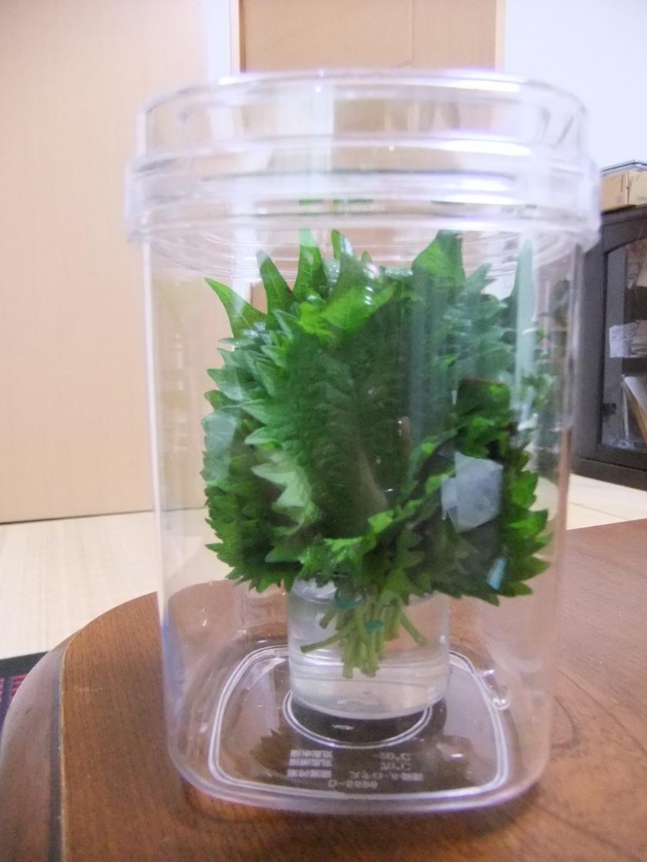 シソの葉の保存方法