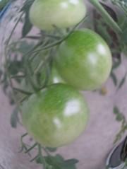 夏野菜のぬか漬け☆オススメは青トマト☆の写真