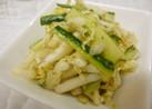白菜ときゅうりのサラダ