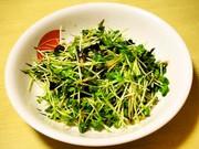あと一品に☆簡単かいわれ海苔サラダの写真