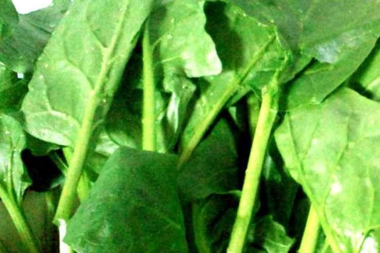酸 ほうれん草 シュウ ほうれん草を茹でる理由。シュウ酸や硝酸態窒素はレンジでは抜けない?