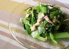 小松菜とツナの美味しいサラダ