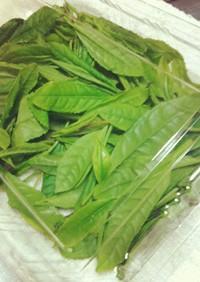 生茶葉料理2012
