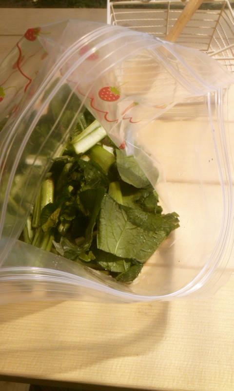 冷凍小松菜☆簡単ストック☆栄養士ママ