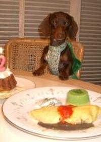 プラム(犬)2歳の誕生日ご飯。