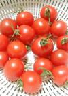 トマト農園伝授プチトマトの正しい保存方法