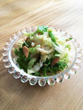 白菜の大量消費に☆白菜とツナのサラダ