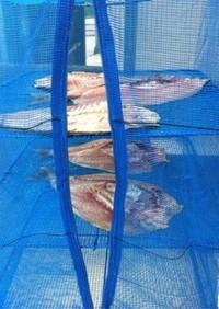魚(イサキ)の干物