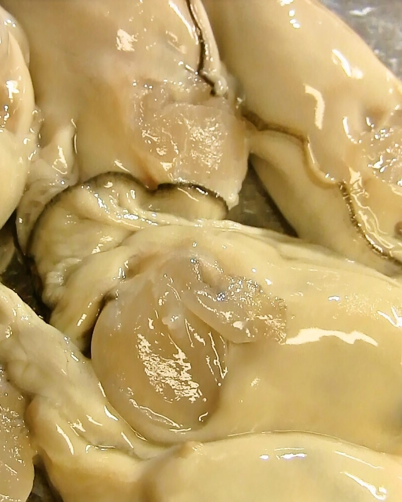 牡蠣の下処理方法♪