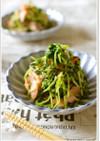 鮭と豆苗のゴマ生姜和え【作りおき】