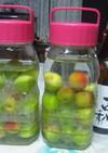 梅酒(芋焼酎:薩摩古秘使用)