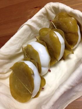 サルトリイバラの柏餅