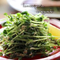 豆苗としらすの胡麻ごまサラダ。