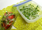 貝割れの保存とトマトでちょいサラダ