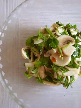 生マッシュルームとパクチーのサラダ