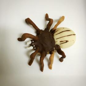 ハロウィンにも!リアル蜘蛛クッキー
