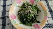 簡単 しらすとサラダほうれん草のお浸しの写真