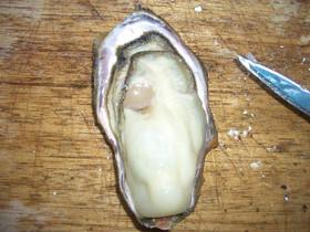 殻付き牡蠣の開け方